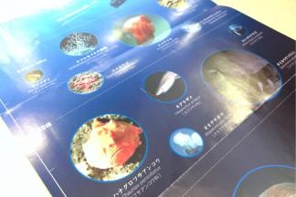 THE深海2